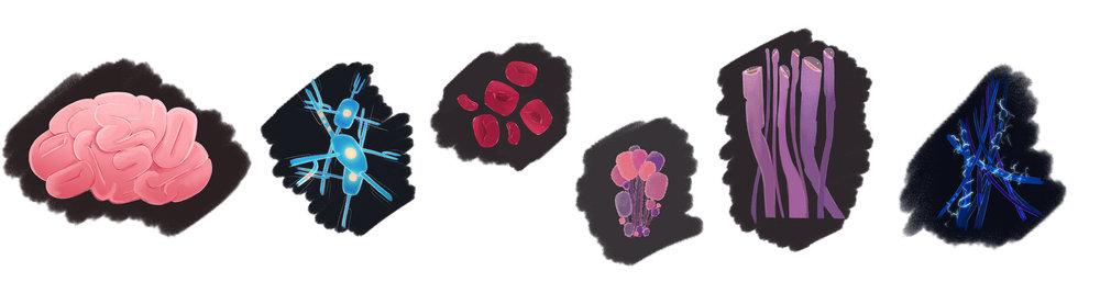 layoutcolor.jpg