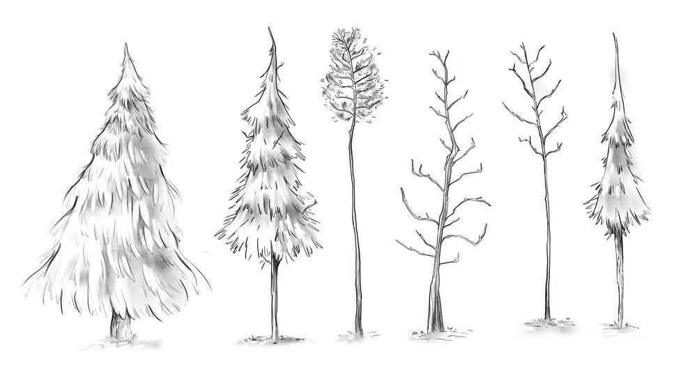 TREES EXPLORATION