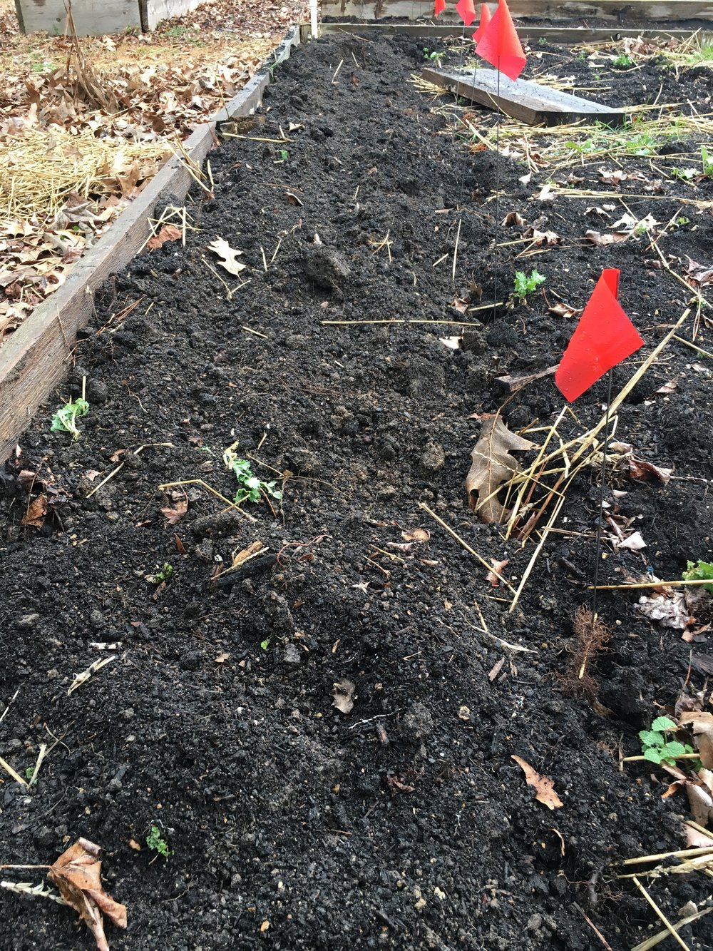 Look at that nice, fluffy soil! Now where did I put that Instagram filter that removes all those weeds?