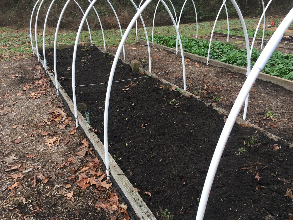 I used the low tunnel hoops and some mason twine to partition the bed into three sections.