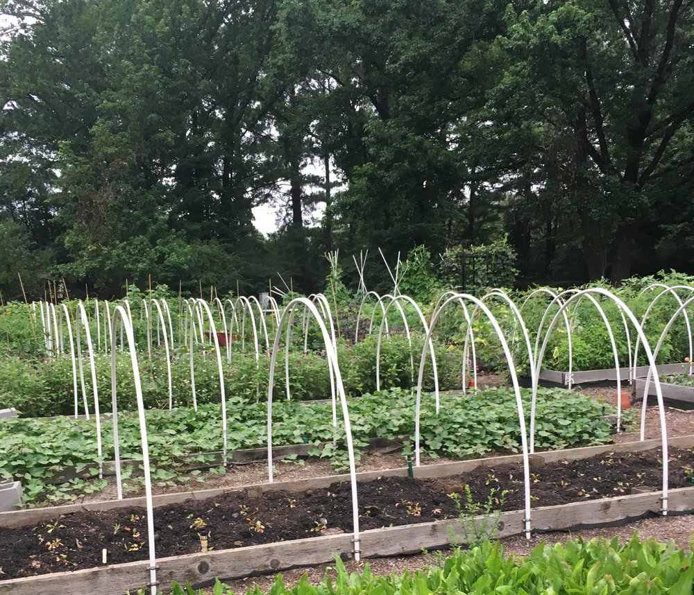 planning and planting for fall u2014 the southern horticulturist