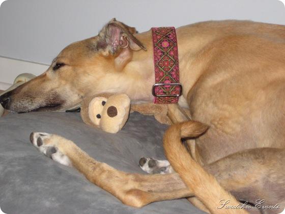 Gia greyhound 3
