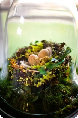 Sara France Photo cloche nest eggs moss