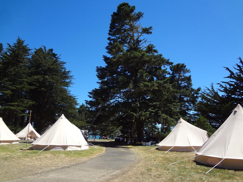 ABMF- camp&tree.jpg