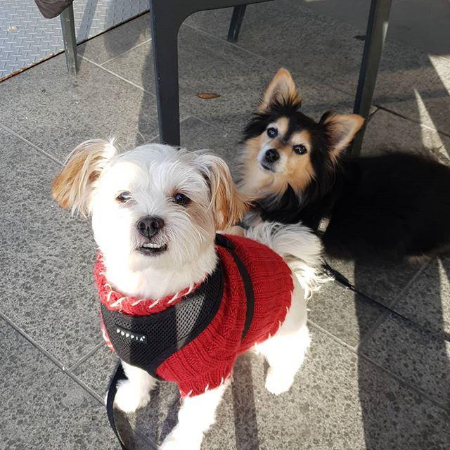 I think these two get along just fine. . . . . . . . . . . . . #adoptdontshop  #rescuedog  @kielglass  @bianca_bradey