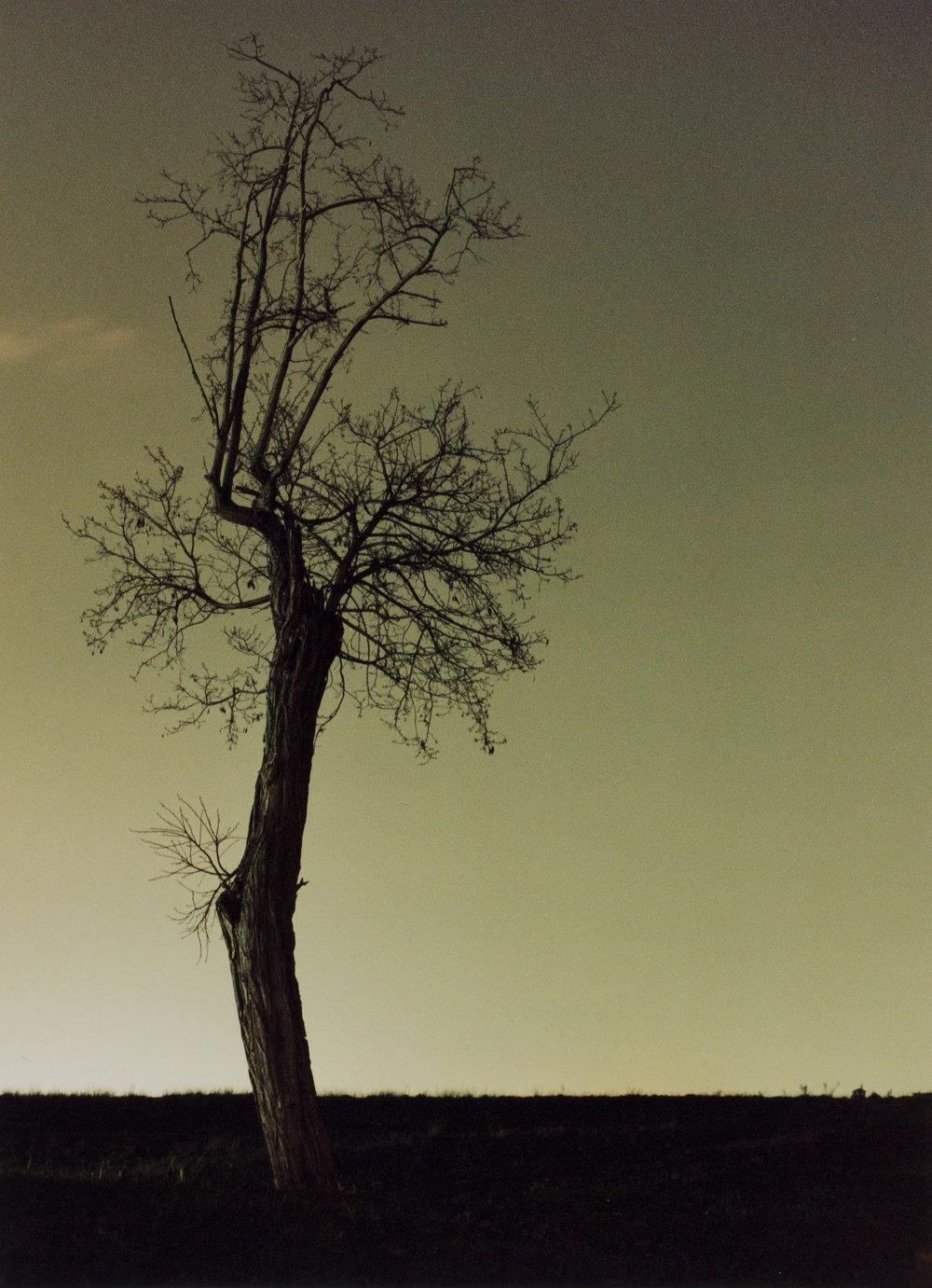 Dead Tree Against Vatican Sky.jpg