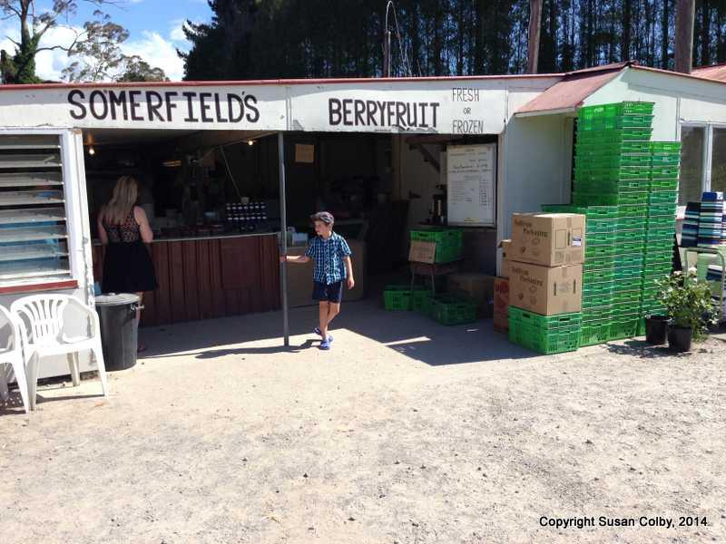 Somerfields berry fields