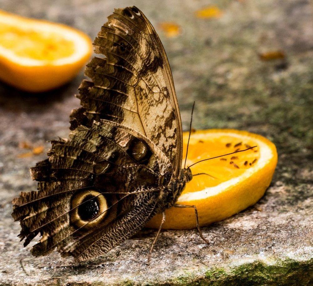 butterflies-19.jpg