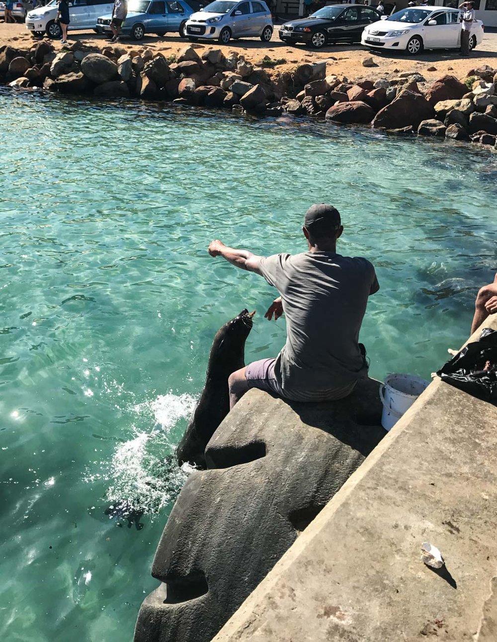 Seal feeding