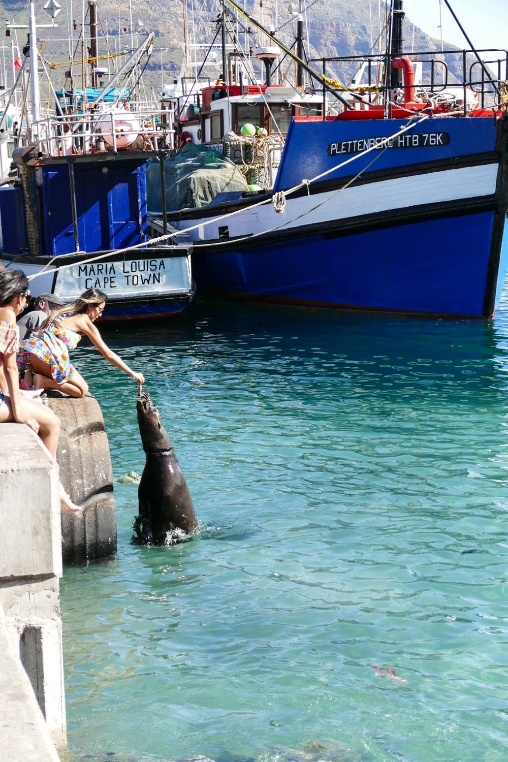 Seal being fed by a tourist