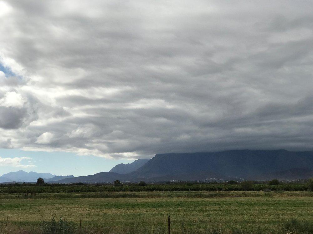 Miles of fynbos