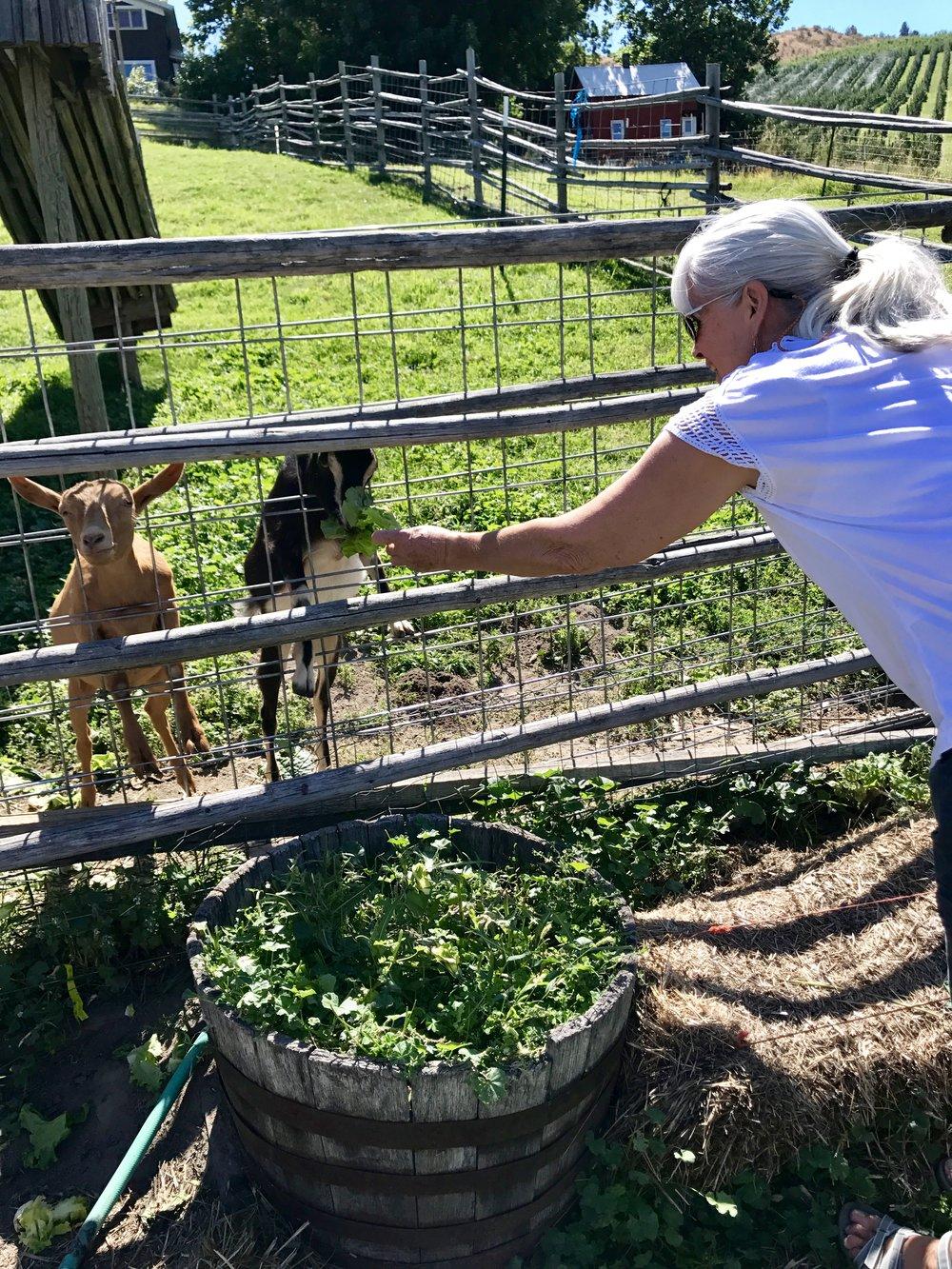 Janet feeding the goats