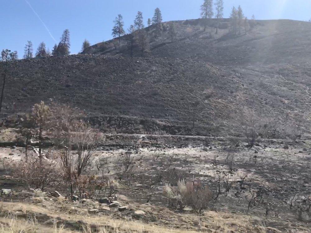 Last year's burn area
