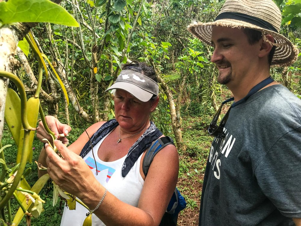 Under Noah's watchful eye, Jane trying her hand at fertilizing a vanilla orchid flower.
