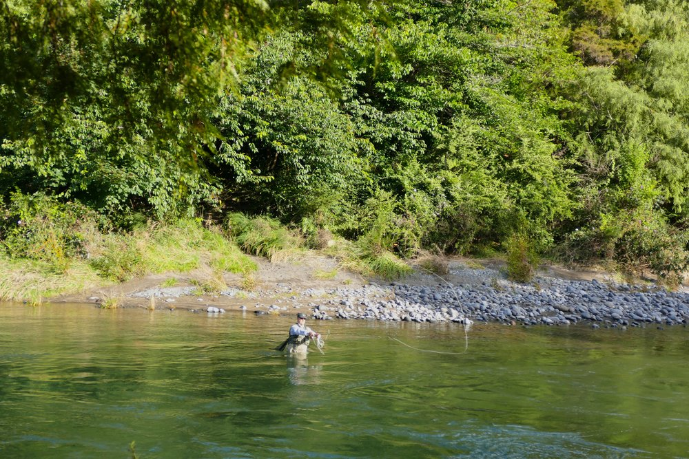 Fly fisherman on the Tongariro River