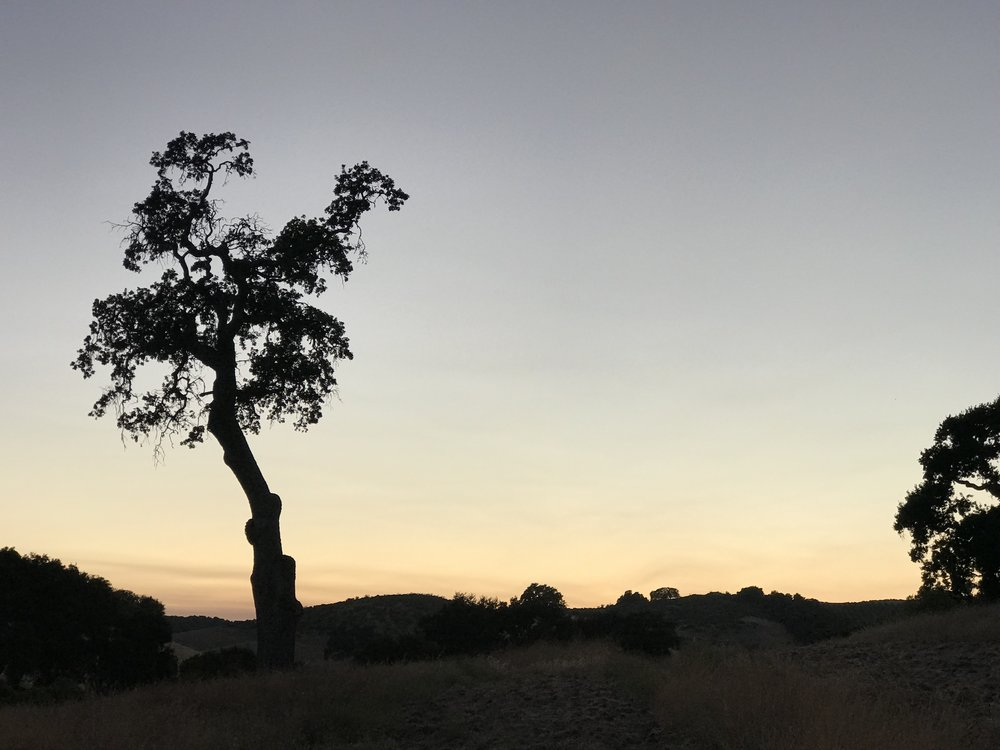 Sometimes I feel like this lonely tree…
