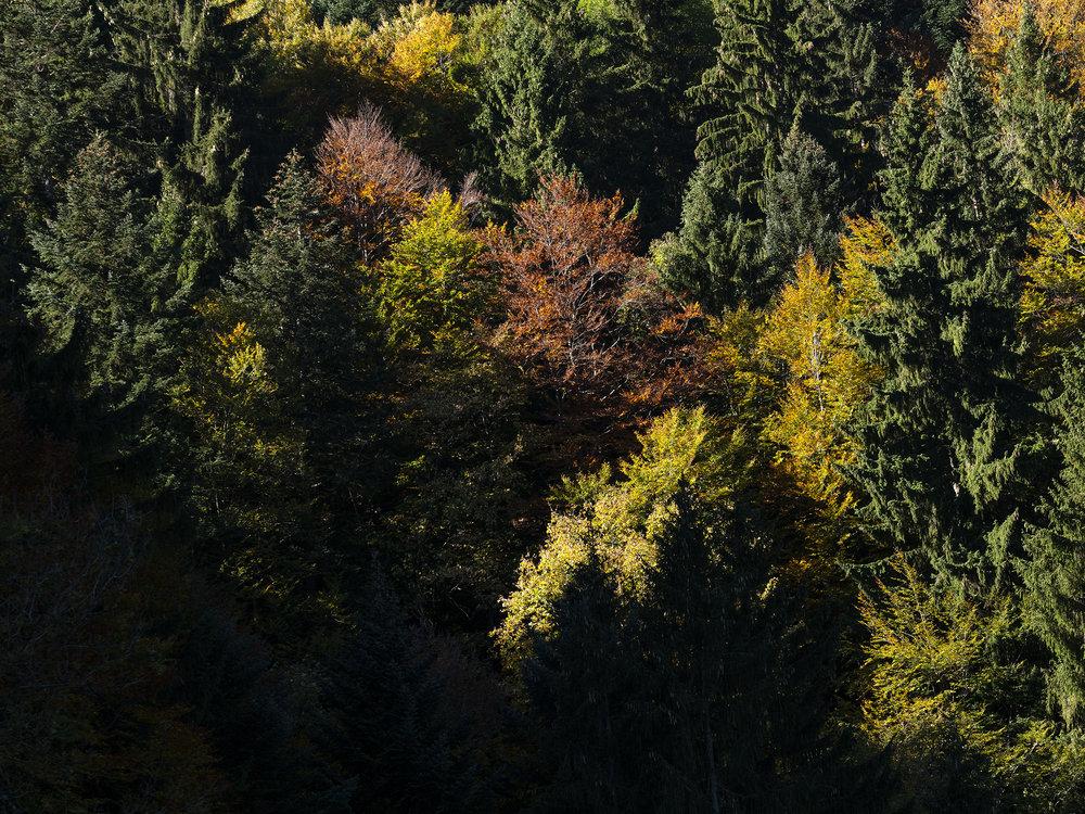 Herbstfarben im Zürcher Oberland (5/7)