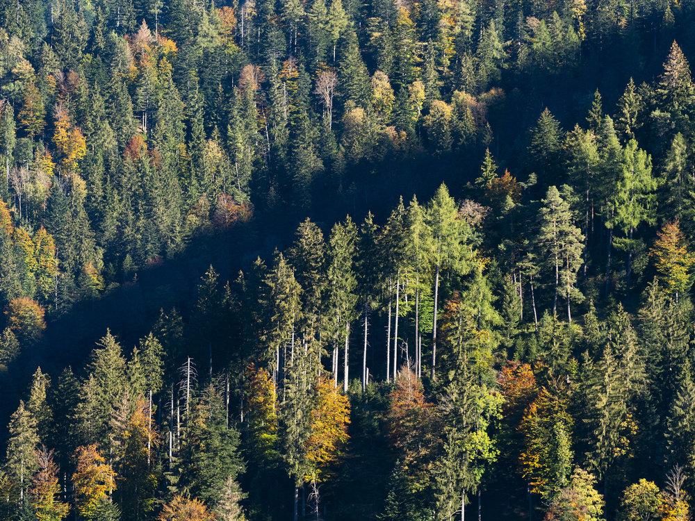 Herbstfarben im Zürcher Oberland (1/7)