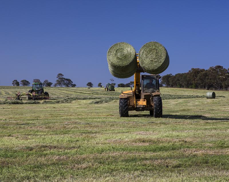 Hay-making.jpg
