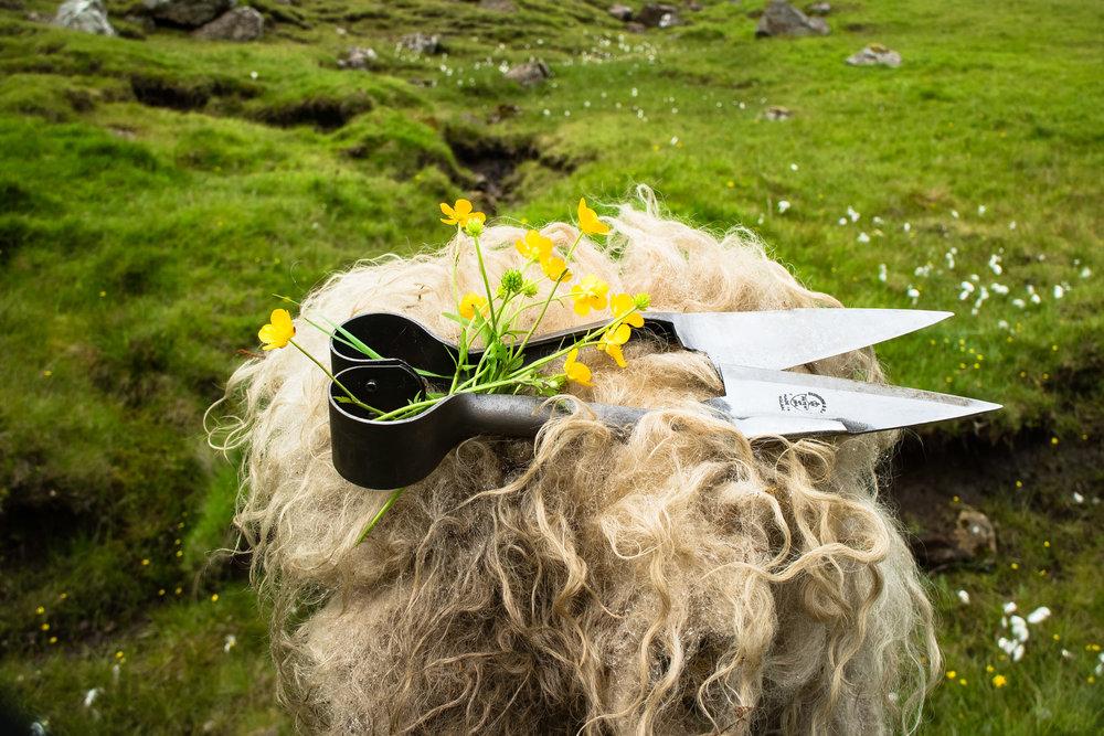 Blade Shears © My Faroe Islands, Anja Mazuhn  (1 von 1).jpg