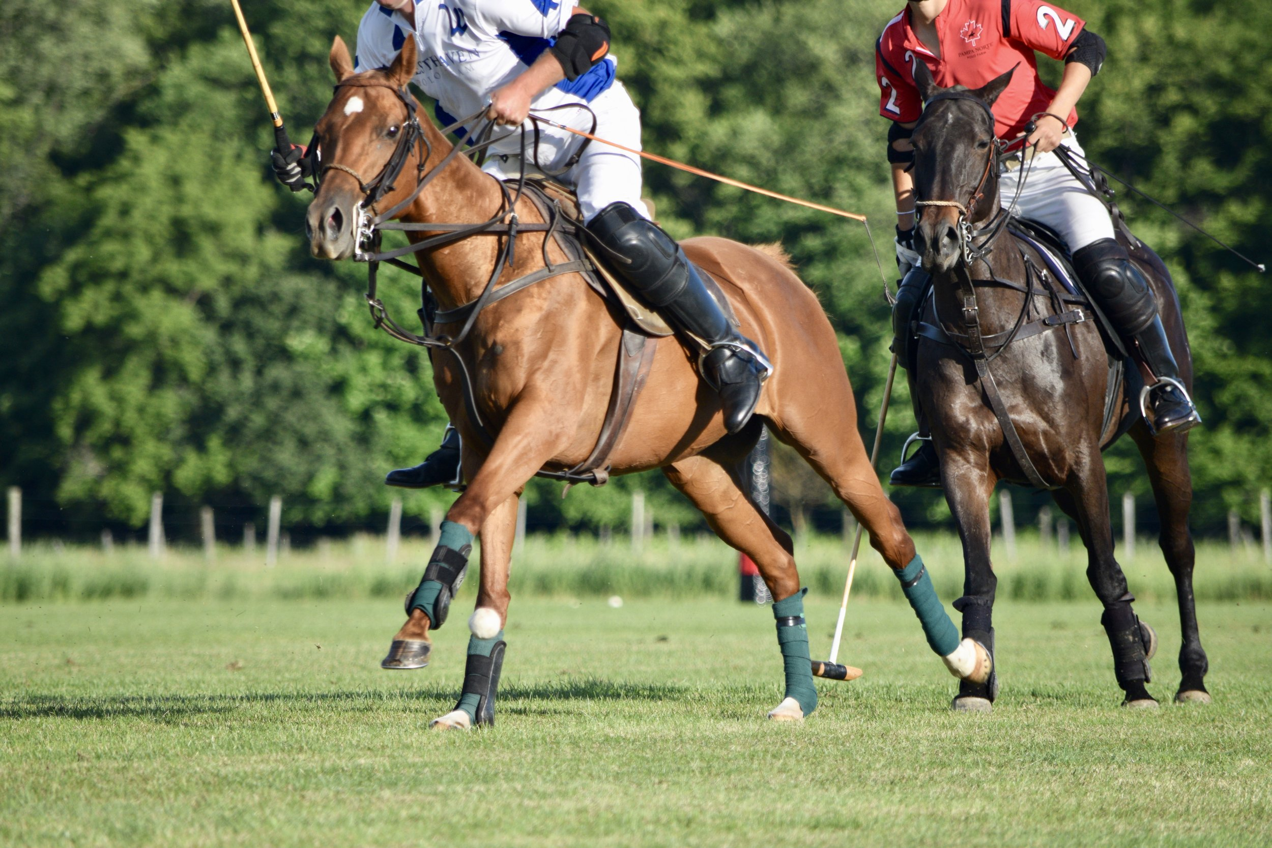 your guide to the real athletes on the polo field polo ponies