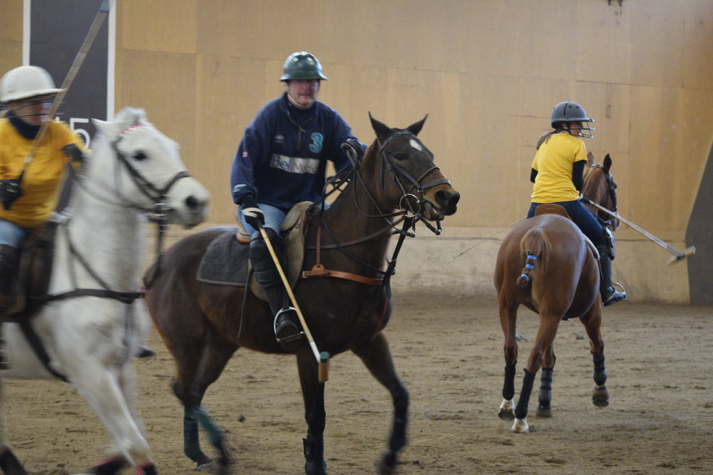 Photo of Polo Pony in Training, Paris