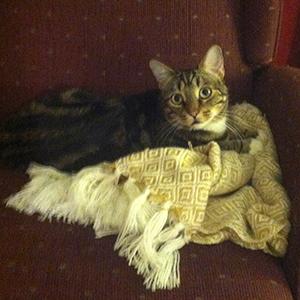 Brody-cat