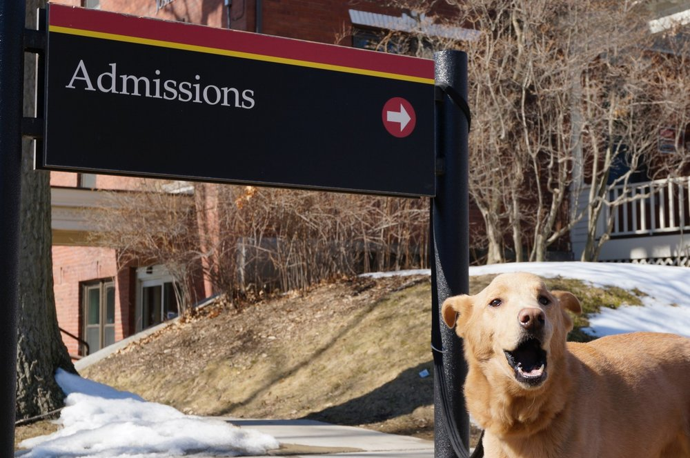 SMALL DOG BARKING IN FRONT OF THE ADMISSIONS OFFICE SIGN ON A COLLEGE CAMPUS. LINKS TO THE GET STARTED PAGE.