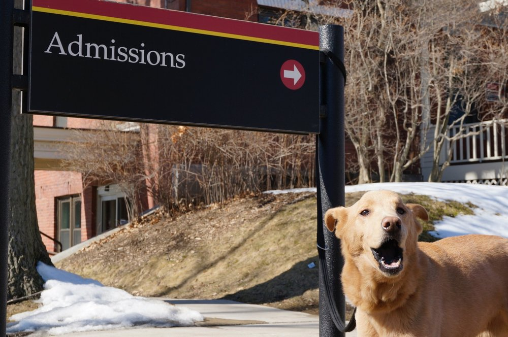 Small dog barking in front of Admissions office sign on a college campus. Links to Get Started Page.