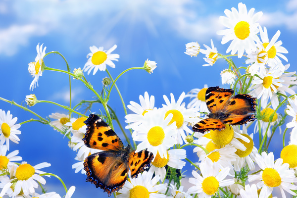 Blue-sky-background-with-beautiful-wildflowers-and-butterflies-HD-picture.jpg