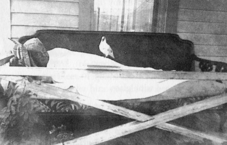 Edmund and Tipi resting on the porch (ca. 1954)