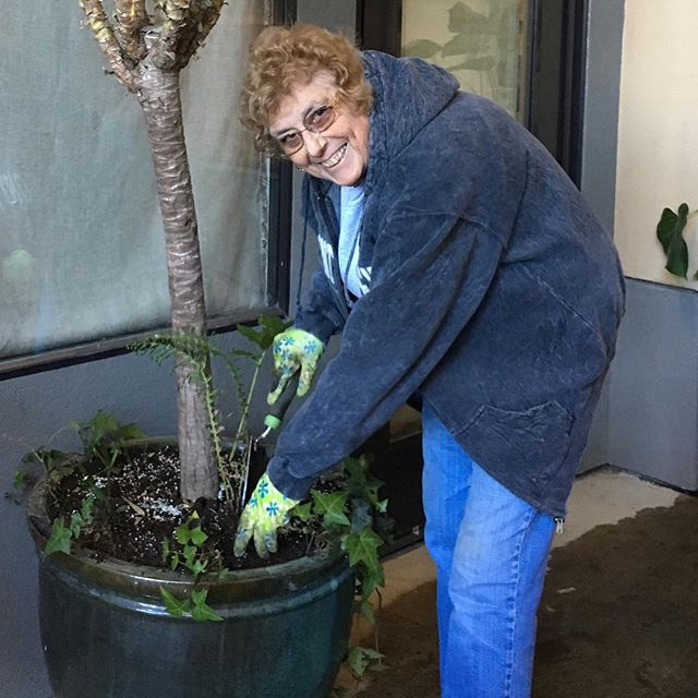 Are you as excited about spring as we are? Lucia and Manuel's mom, LaSalette, helping make our patio lush and beautiful!  Thanks, Mom!  #spring #patio #healdsburg #thanksmom