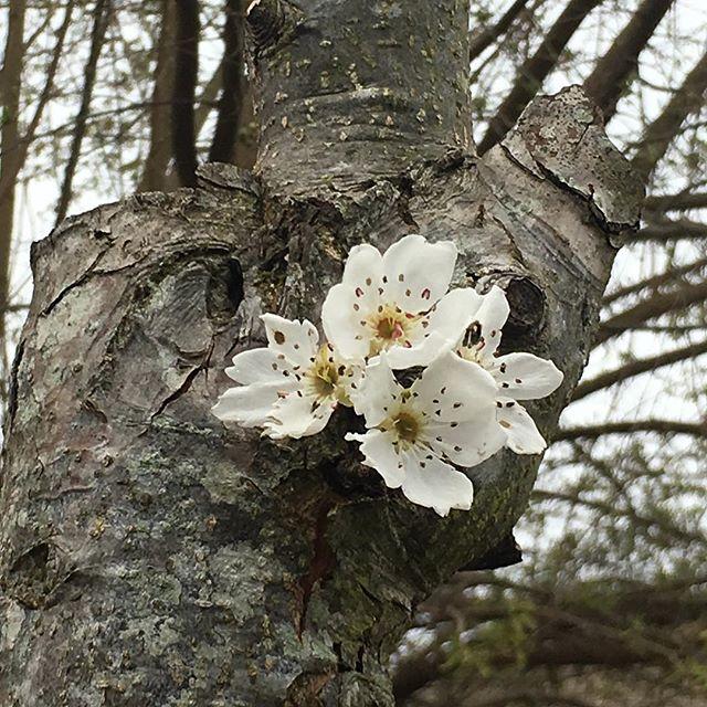 Spring has sprung! Happy Spring! #spring #healdsburg