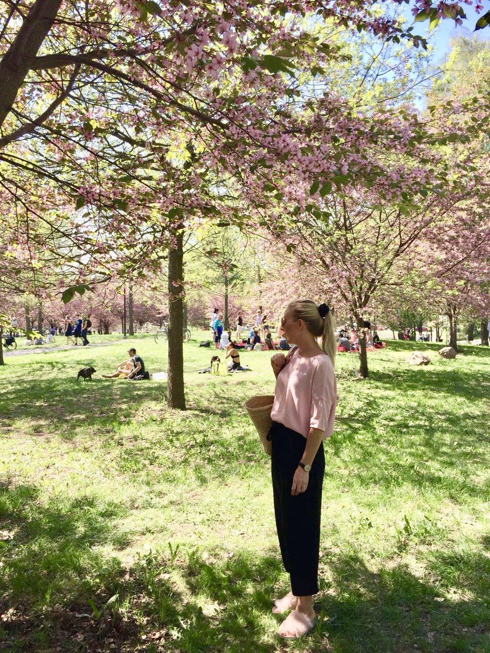 Cherry tree park