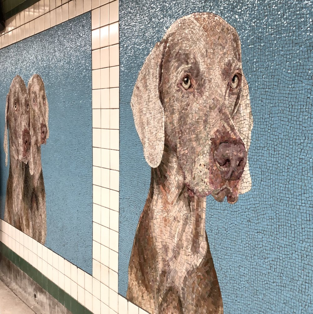 """William Wegman """"Stationary Figures."""" New tile mosaics at the 23rd & 6th F/M Station. Photo Cred: Jacque Donaldson"""