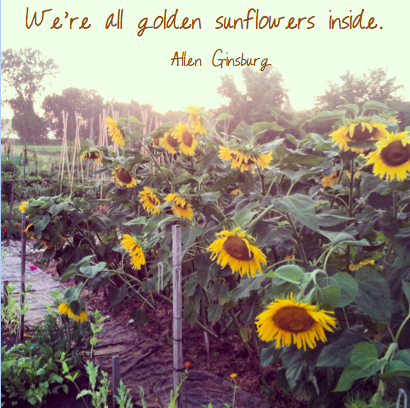 goldensunflowers
