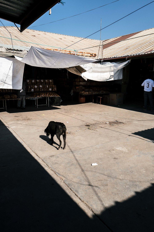 Oaxaca 67.jpg