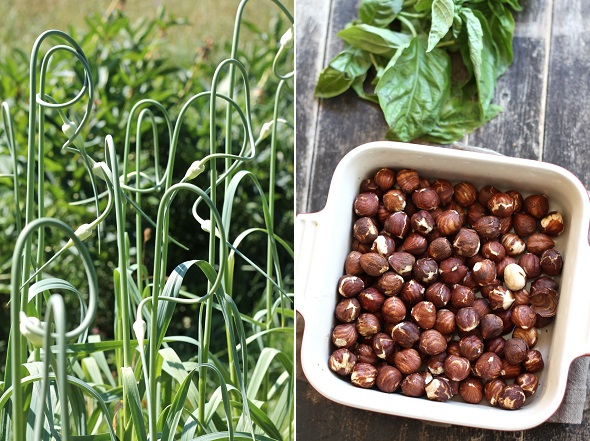 scapes and hazelnuts