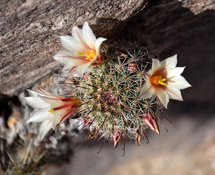 fishhook_cactus.jpg