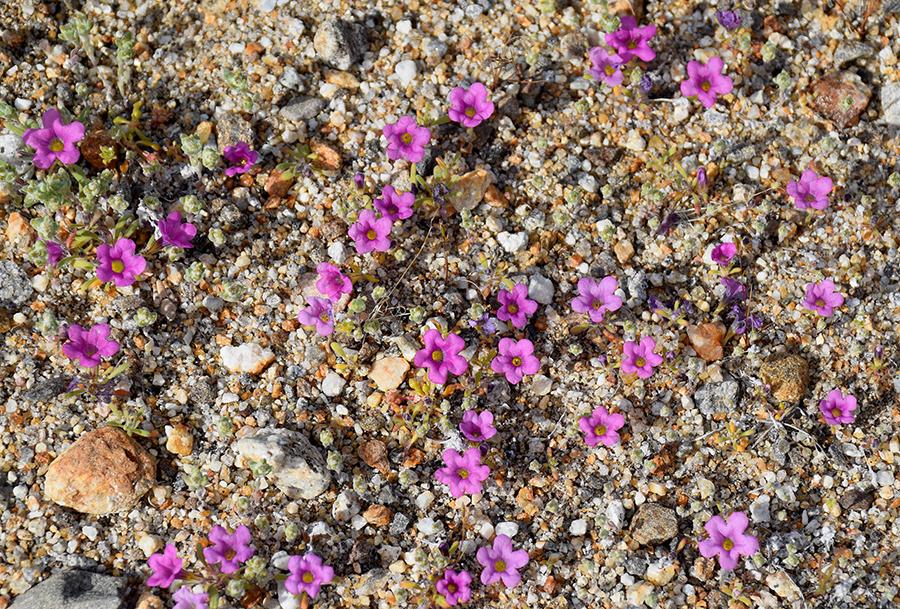 purplemat.jpg