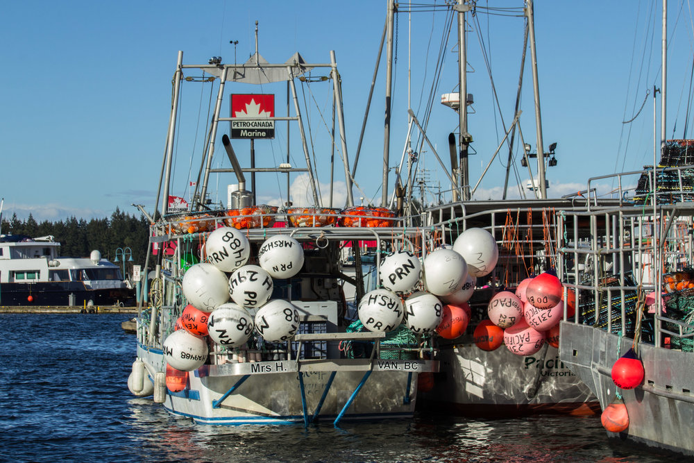Fishing Boats in the Nanaimo Harbour     Copyright © Afro Boy Productions. All rights reserved.