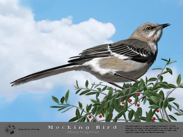 web bird.jpg