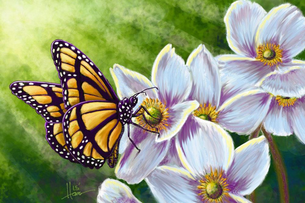 butterfly-web.jpg