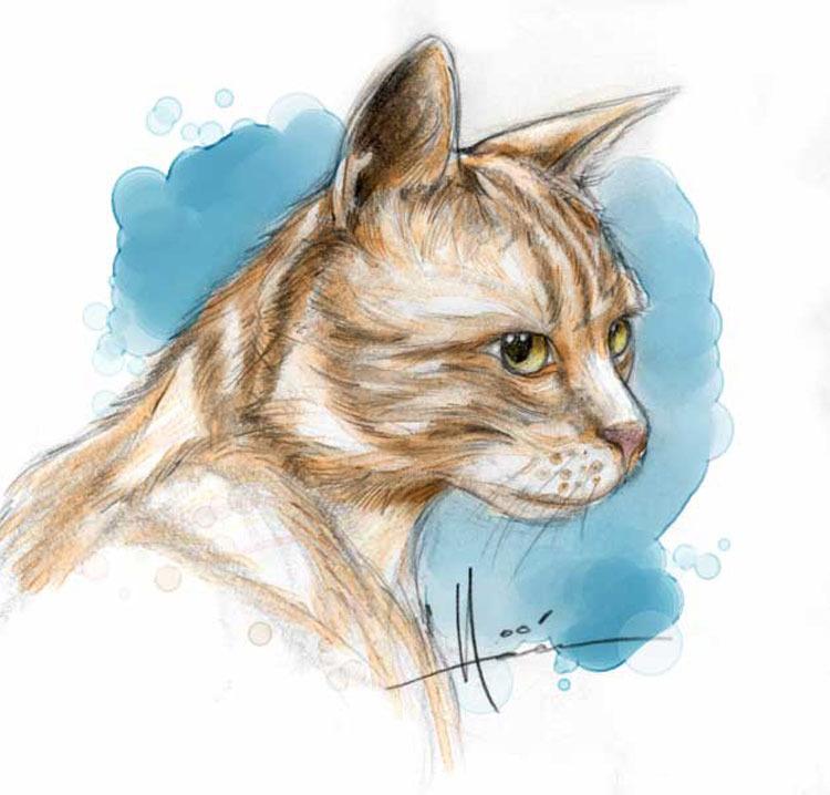z_cat.jpg