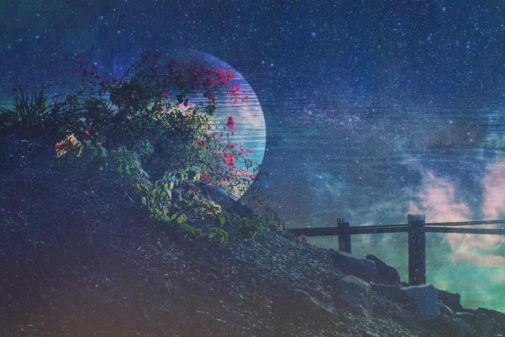 Moon Flower.jpg