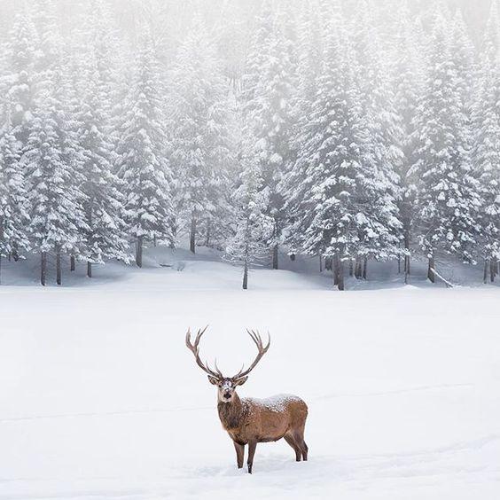 Where's the sleigh Santa?  via