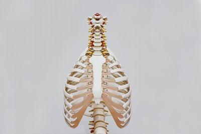 Intro to Anatomy for Yoga Teachers