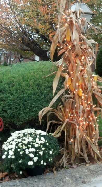 cornstalk light.jpg