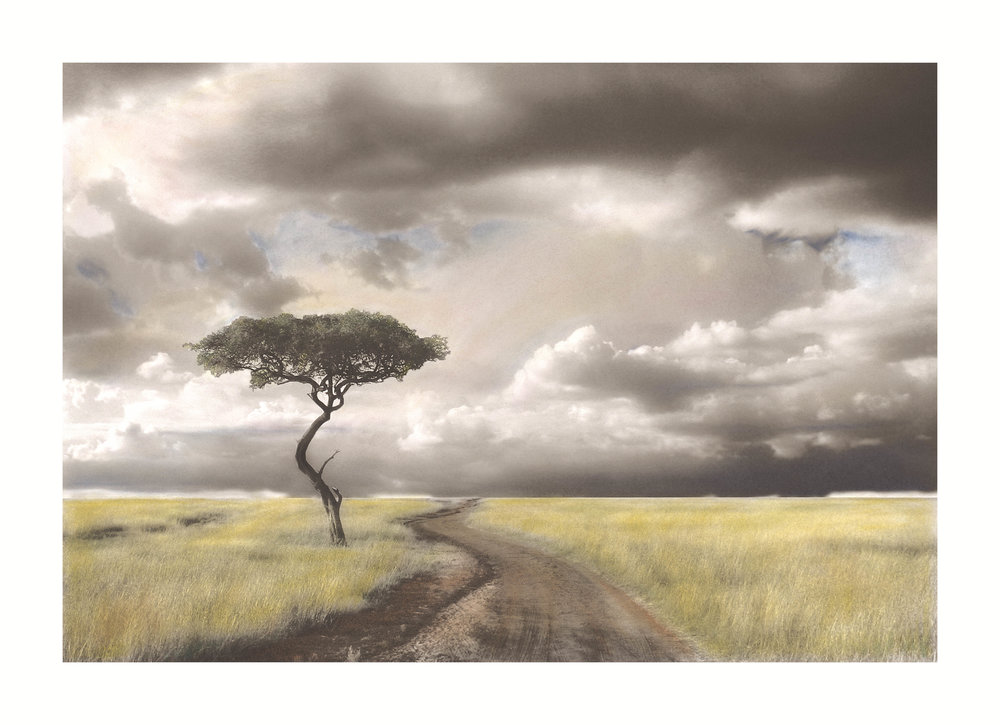 Lone Tree on the Masai Mara                                                           This piece began as a black & white image, printed on fine art paper then  hand-colored  with soft pan pastels.                                                                       The  Lone Tree on the Masai Mara  is available in various sizes as an Archival Giclee Print.