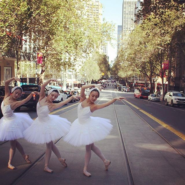 Our beautiful Swans were stopping traffic on Melbourne's Collins Street today!